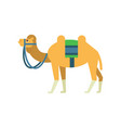 arabian bactrian camel with colorful saddle vector image