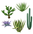Cactuses and succulents set Plants of desert vector image