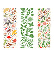 cooking flat herbs and spices organised in three vector image