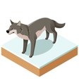Isometric wolf icon with a square ground vector image