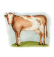 Agricultural animal vector image