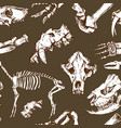 sketchy prehistorical animals pattern archeology vector image