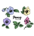 Hand drawn pansy flowers vector image