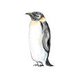penguin hand drawn vector image