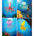 Sea animals under the sea vector image