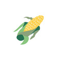 corn cereal flat isolated vector image