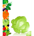 vegetables cabbage vector image