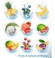 Big collection of fruit in a water splash vector image