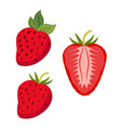 set of berries whole strawberry slices of berry vector image