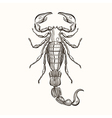 Hand drawn engraving Sketch of Scorpion for tattoo vector image