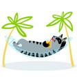 summer holidays cat lying in hammock feline vector image