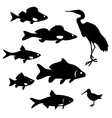 fish and birds vector image