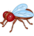 Fly cartoon vector image