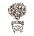 Flower in a pot vector image vector image