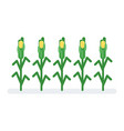 flat style of corn vector image