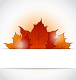 Autumnal maple leaves sticking out of the cut vector image