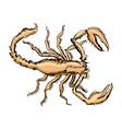 sketch of scorpion vector image