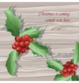 Winter berries of viburnum vector image