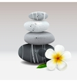 Spa still life with frangipani flower vector image vector image