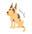 Great Dane isolated Large breed of domestic dog vector image