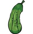 cucumber vegetable cartoon vector image