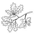 Oak branch with acorns outline vector image
