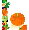 vegetables pumpkin vector image