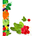 vegetables radish vector image