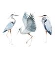 Watercolor heron birds vector image