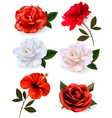 Set of a beautiful flowers isolated on a white vector image vector image