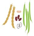 Kidney Bean vector image