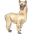 alpaca animal cartoon vector image