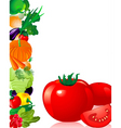 vegetables tomato vector image vector image