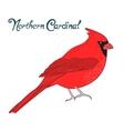 Bird northern cardinal vector image
