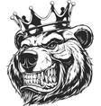 head of a ferocious bear vector image