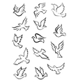 Outline graceful dove and pigeon birds vector image vector image