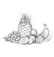 fruit piece isolated on the white vector image