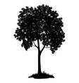 Chestnut tree silhouette vector image vector image