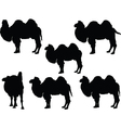 camel collection - vector image