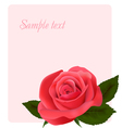 card with beautiful pink rose vector image