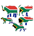 Big Five South Africa vector image