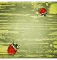 spring ladybirds vector image vector image