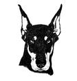 Doberman pinscher dog portrait in vector image