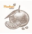 Mandarin Card Hand Draw Sketch vector image