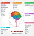 Human brain anatomy and functions vector image