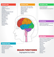 Human brain anatomy and functions vector image