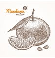 Mandarin Card Hand Draw Sketch vector image
