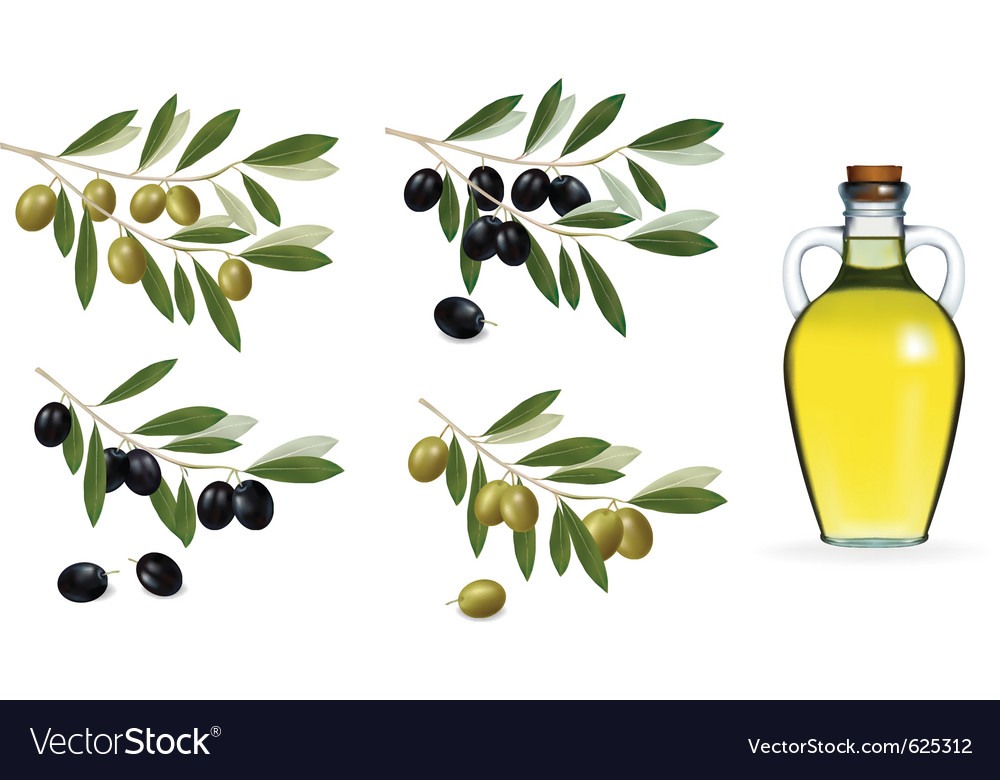 Bottle of olive oil and olive branch vector