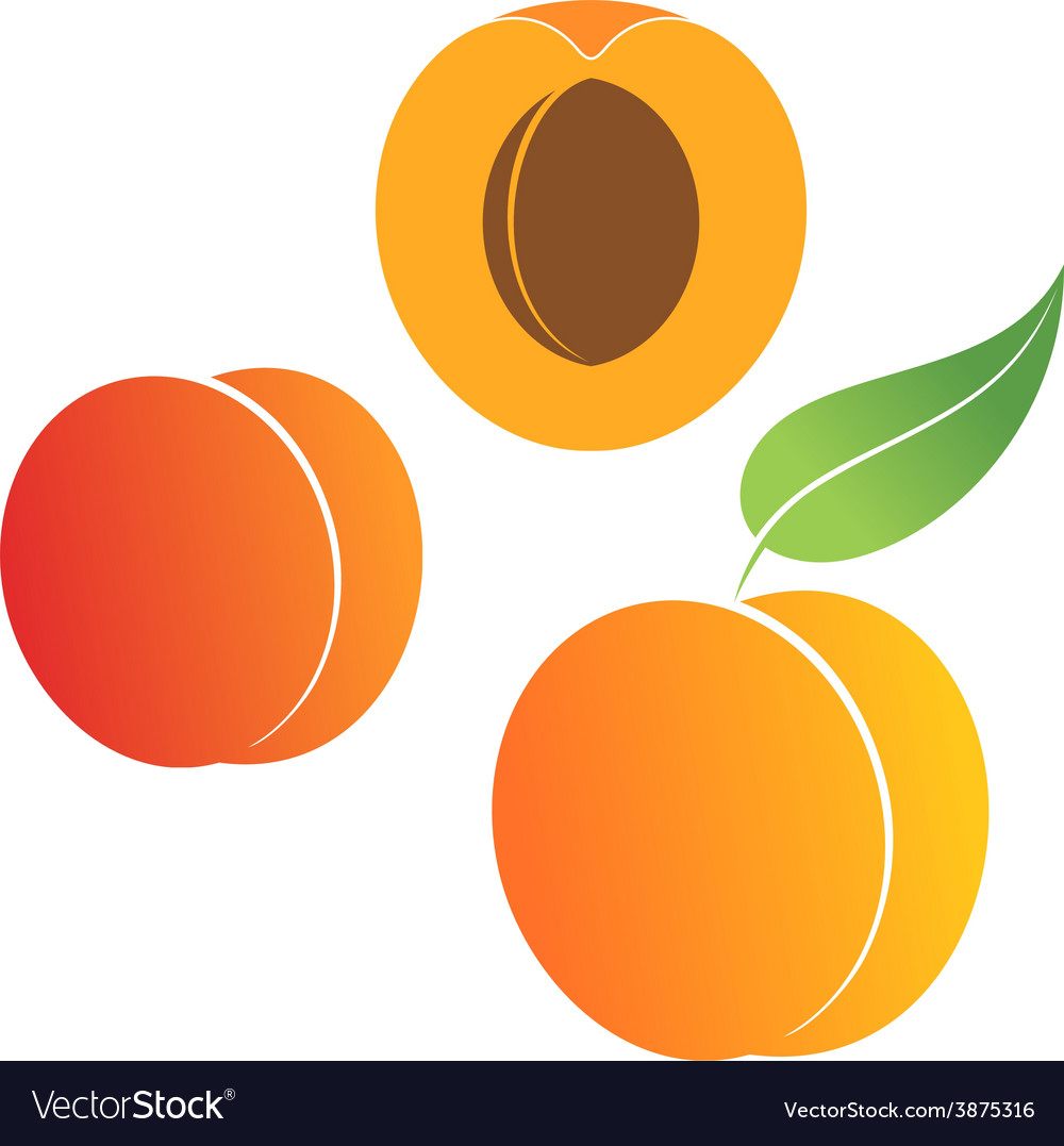 Peach set vector