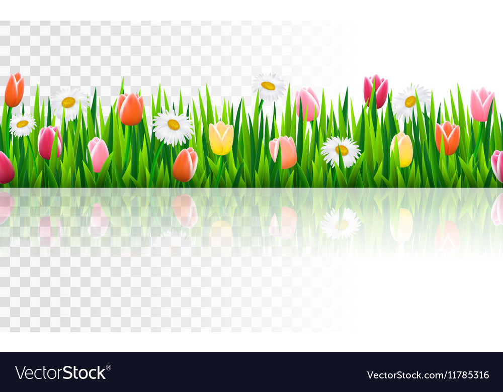 Seamless border with grass and flowers vector
